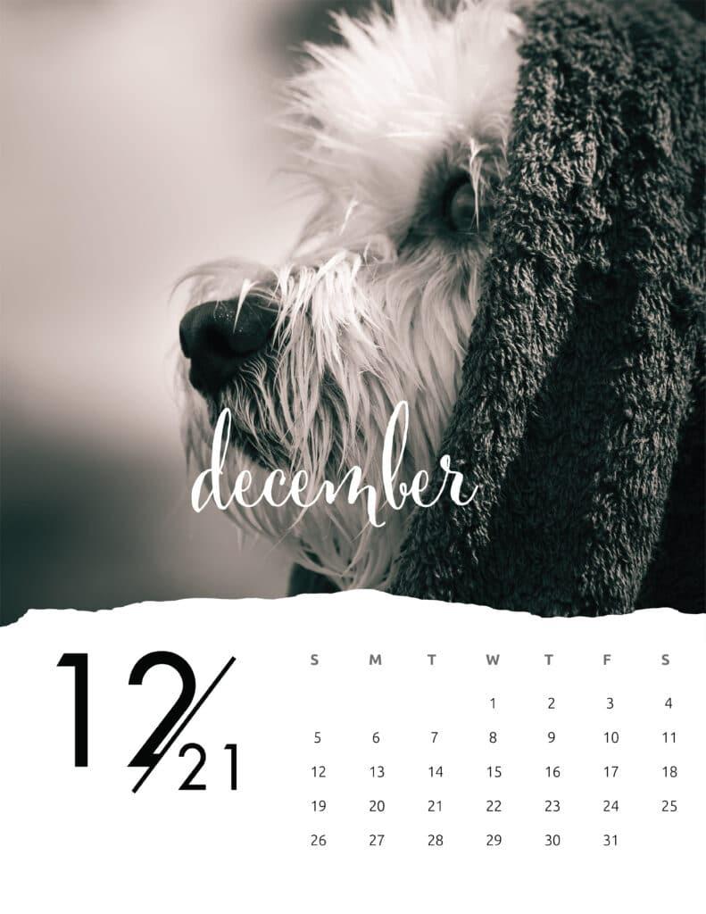December 2021 Calendar Animal Photography