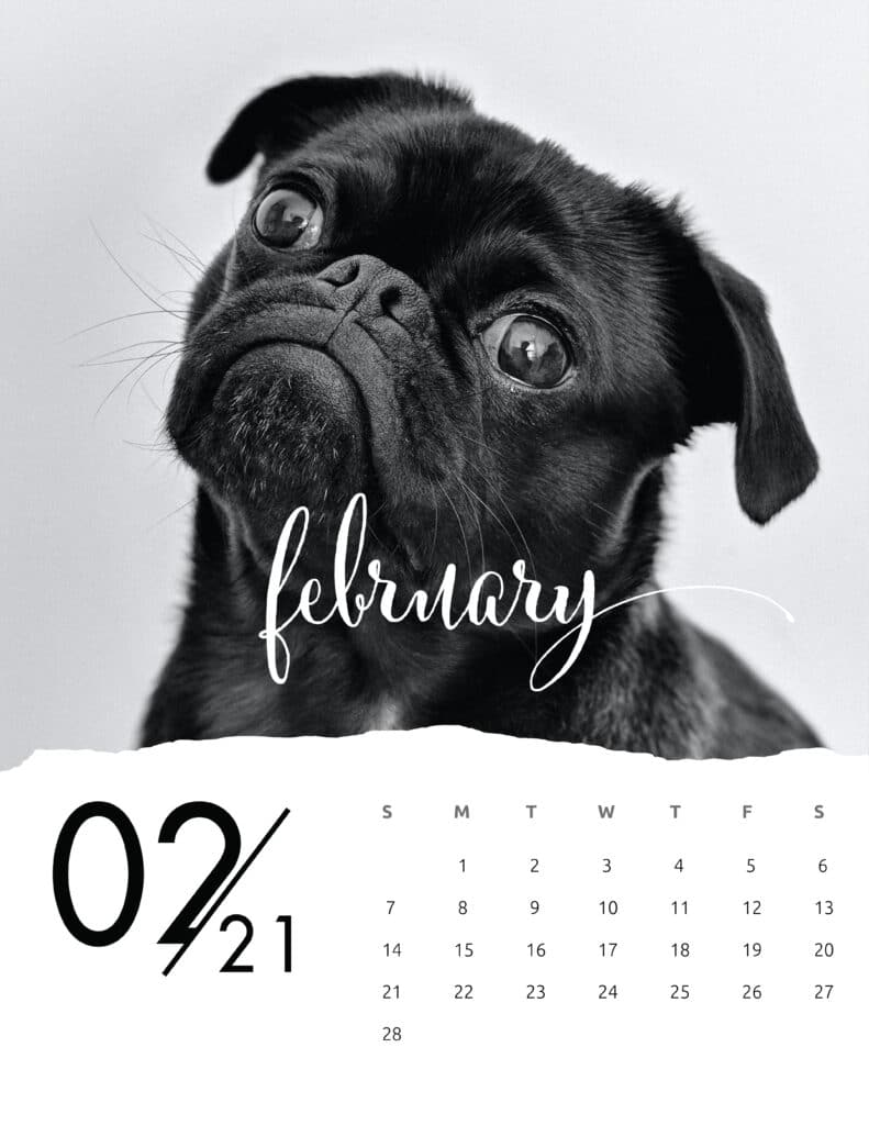 February 2021 Calendar Animal Photography
