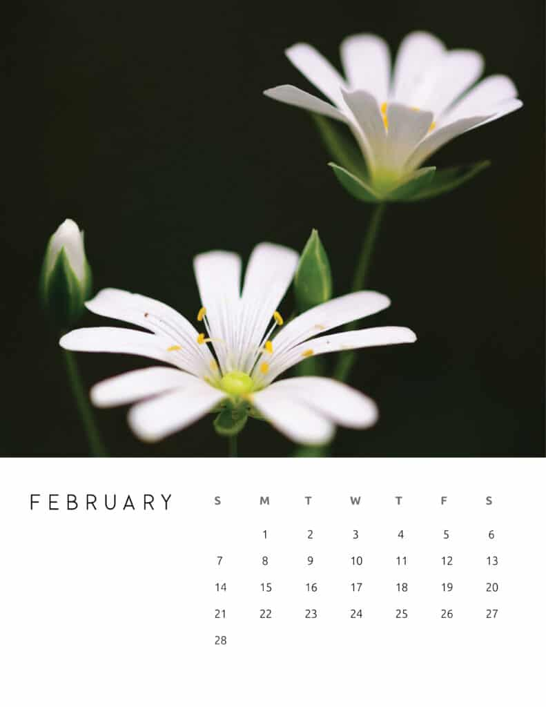 February 2021 Calendar Floral Photography
