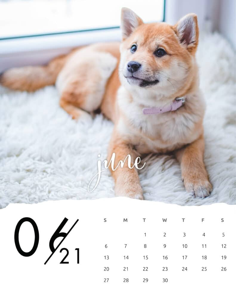 June 2021 Calendar Animal Photography
