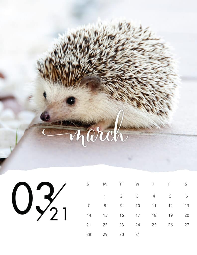 March 2021 Calendar Animal Photography