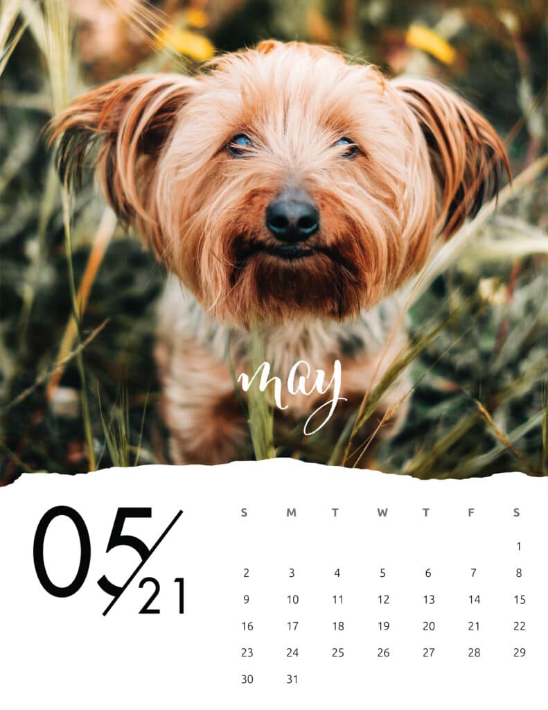 May 2021 Calendar Animal Photography