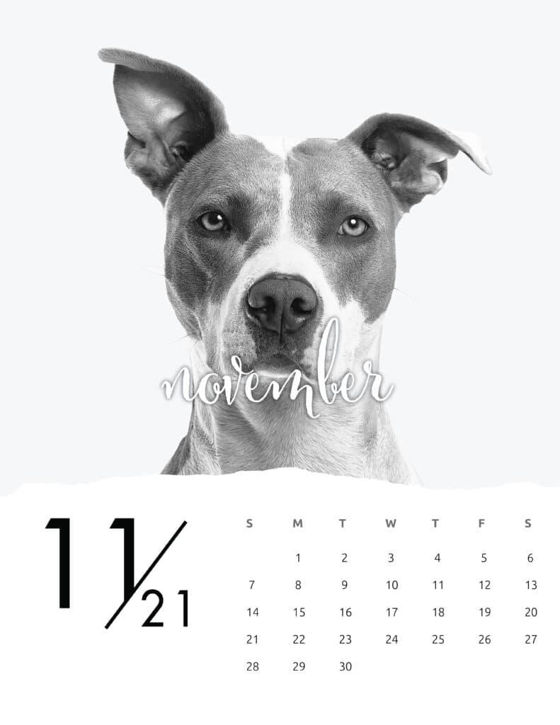 November 2021 Calendar Animal Photography