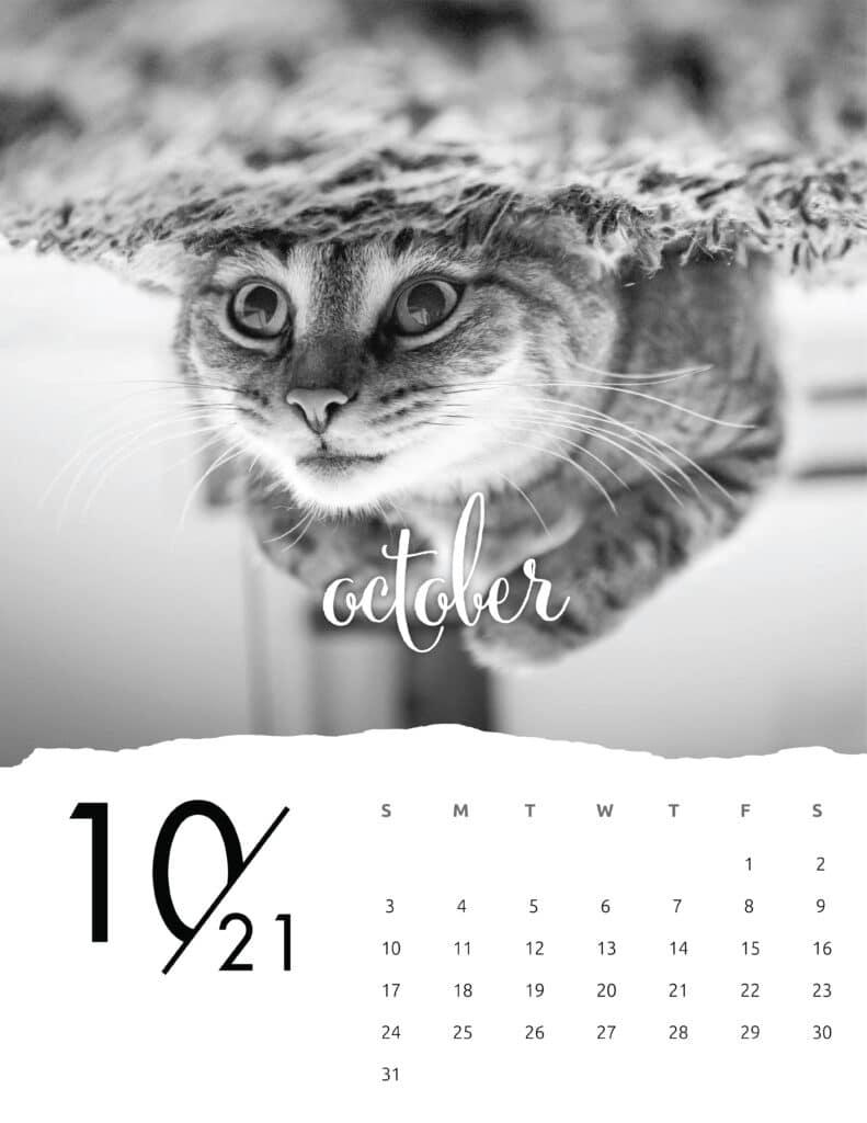 October 2021 Calendar Animal Photography