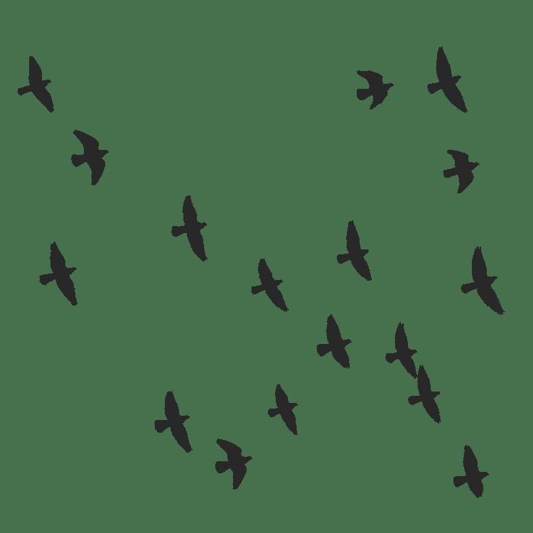 Flock of birds flying - Free SVG