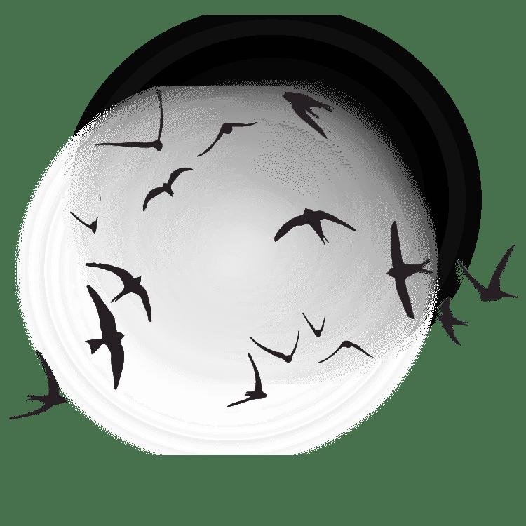 flying birds - Free SVG