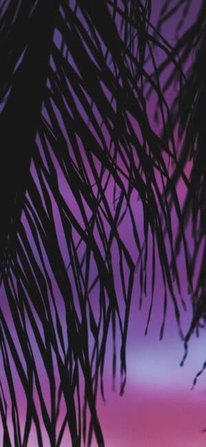 Palm Trees Purple Aesthetic Wallpaper
