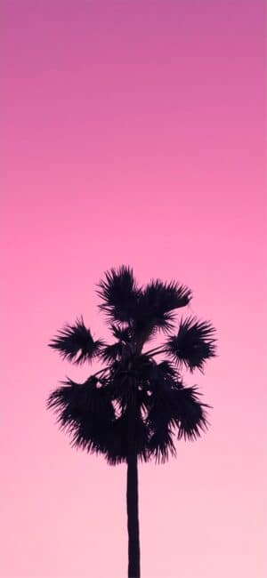 Pink Palm Tree Phone Wallpaper