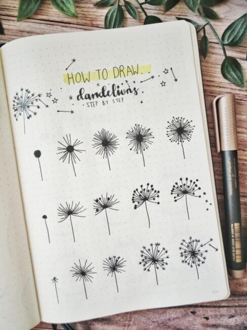 how to draw dandelions step by step