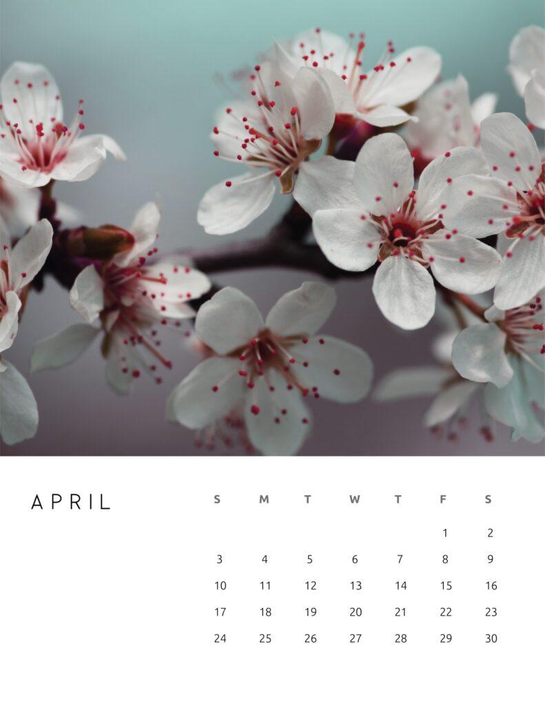 nature photography calendar 2022 - april