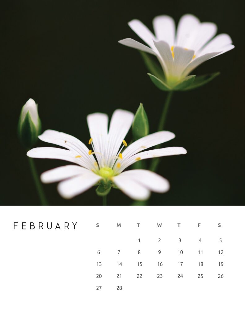 nature photography calendar 2022 - february
