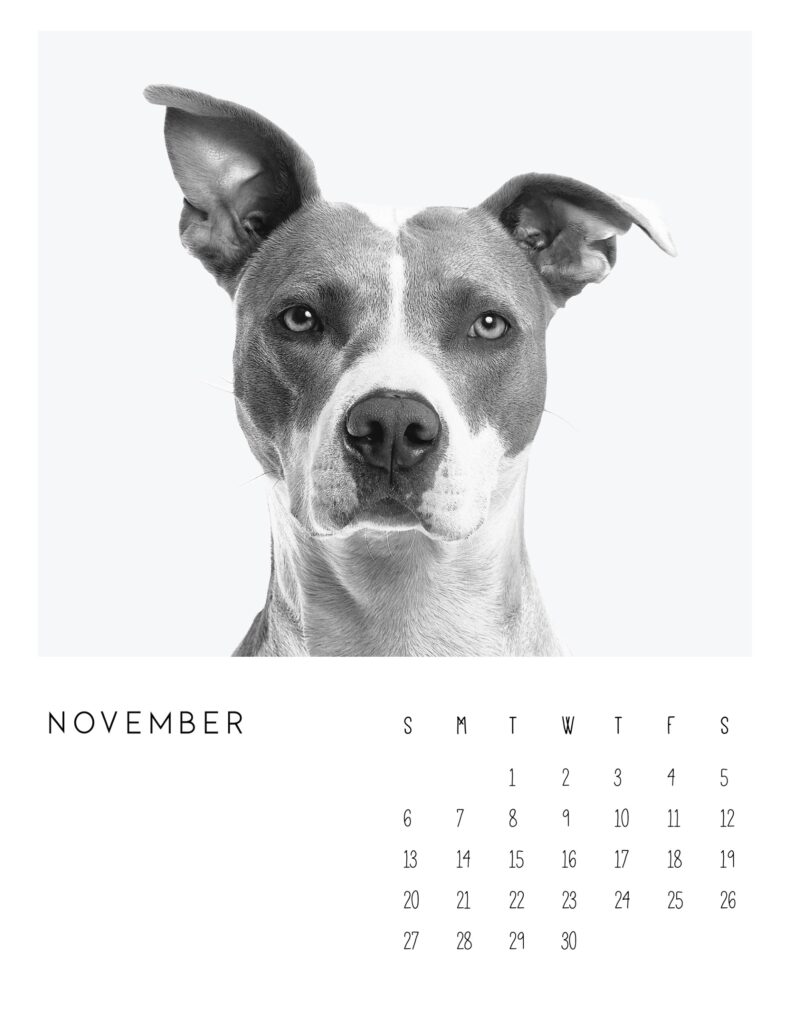 photo calendar 2022 - November
