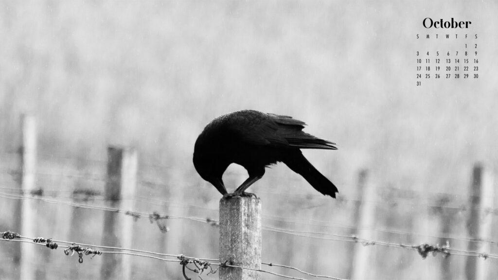 Black crow October 2021 calendar wallpaper
