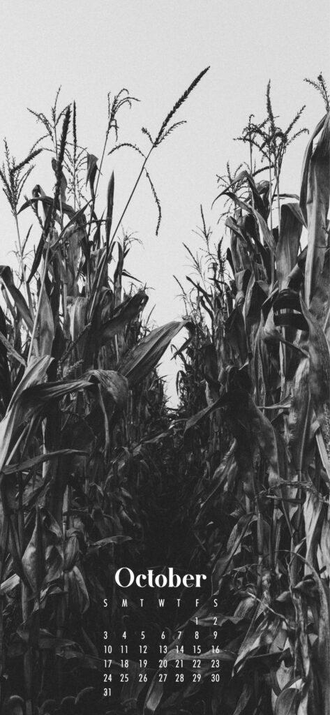 Corn field fall halloween October 2021 wallpaper calendar phone background