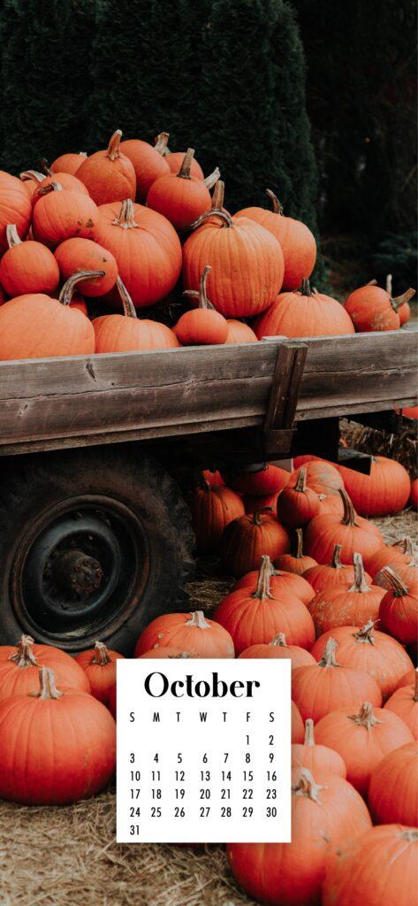 Pumpkin harvest October phone wallpaper
