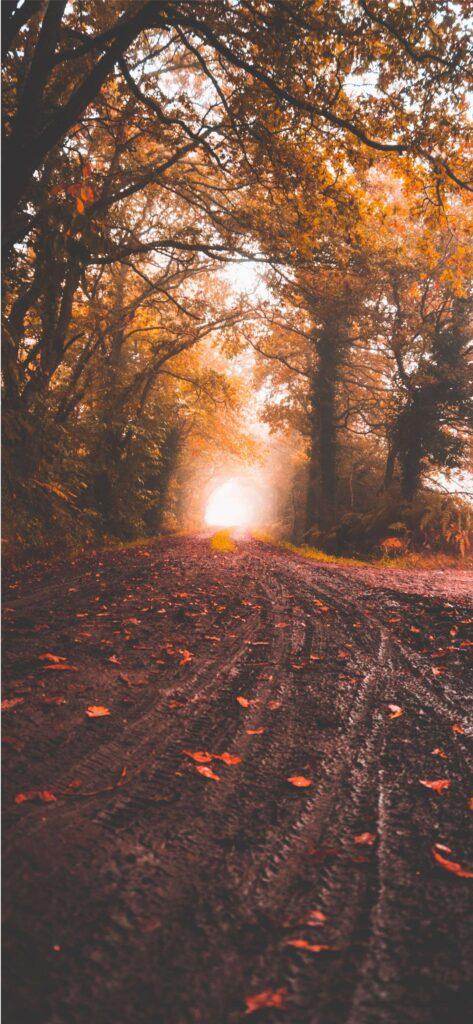 Aesthetic Fall Wallpaper Woodland