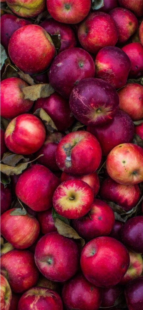 Apples Fall Wallpaper iPhone