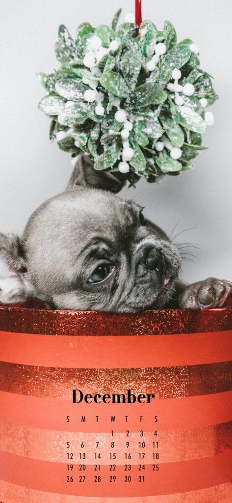 December 2021 Calendar Phone Aesthetic Wallpaper French Bulldog Gift