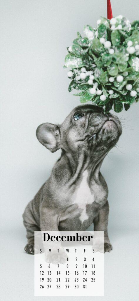 December 2021 Calendar Phone Aesthetic Wallpaper French Bulldog Mistletoe