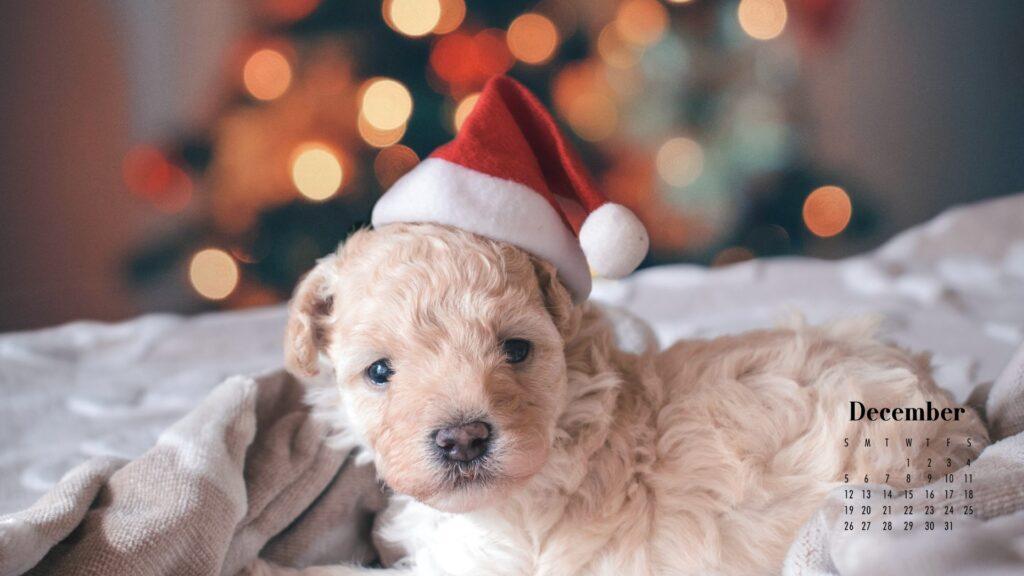 December 2021 Calendar Wallpaper Cute Dog in Santa Hat