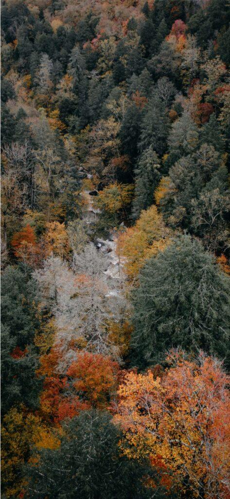 Fall Wallpaper Woodland