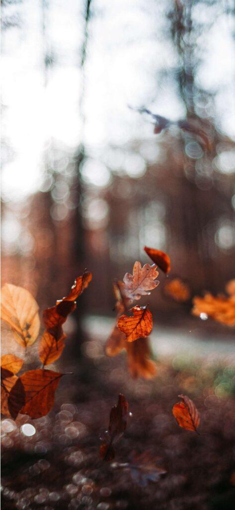 Falling leaves Fall Aesthetic Wallpaper