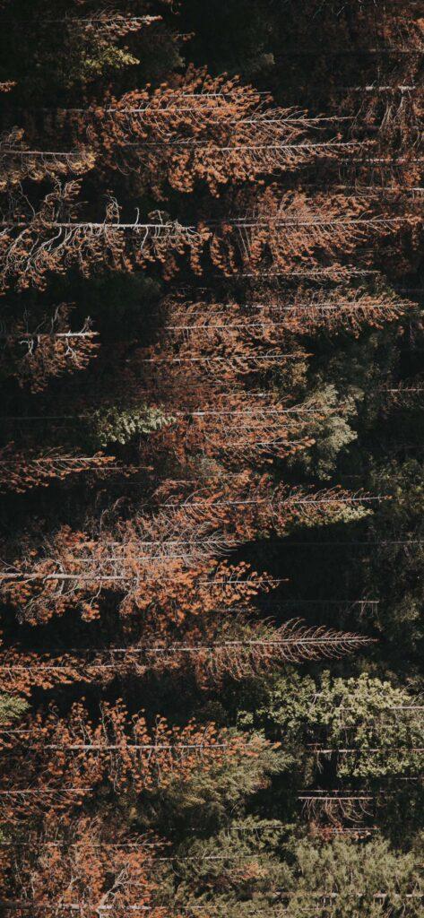 Forest Autumn Background