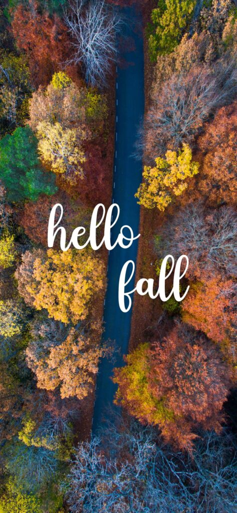Hello Fall Forest Fall Wallpaper
