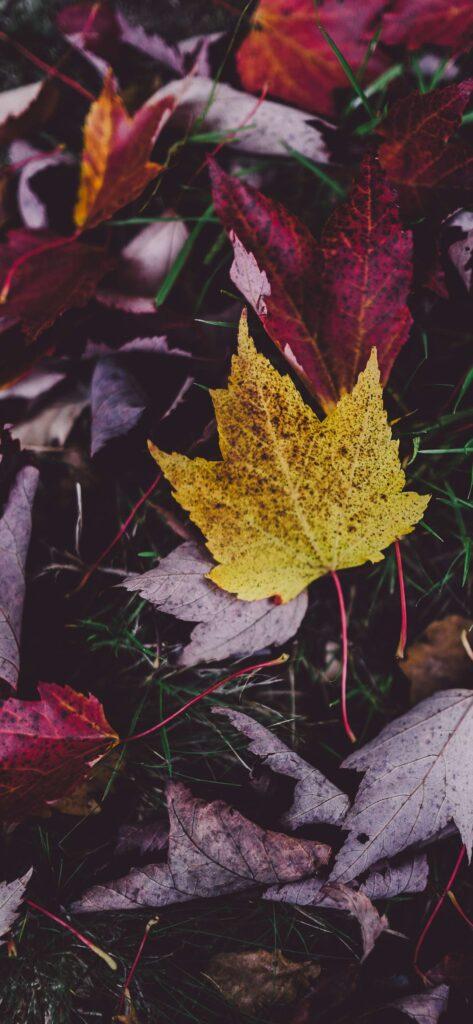Leaves Aesthetic Fall Wallpaper