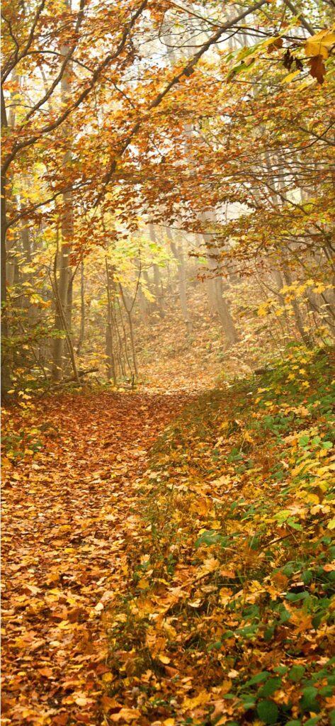 Leaves Cute Fall Background