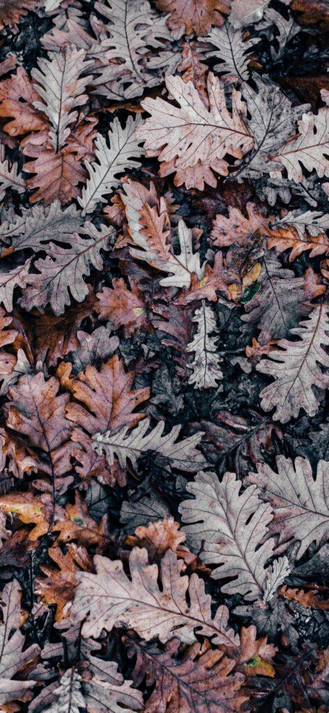 Leaves Cute Fall Wallpaper