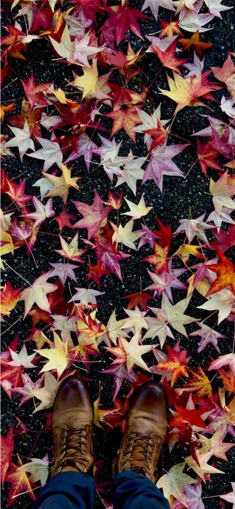 Leaves Fall Wallpaper
