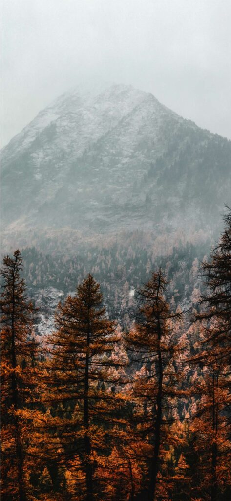 Mountain Forest Aesthetic Fall Wallpaper