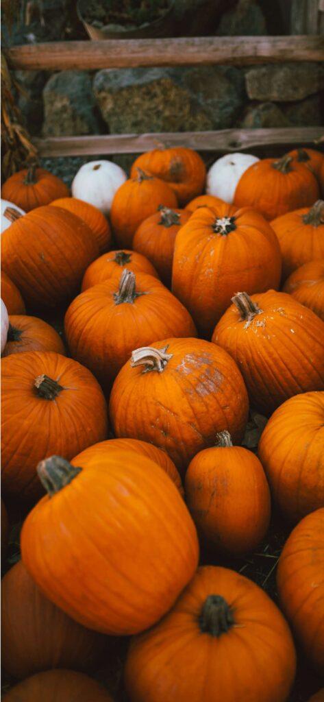 Pumpkin Aesthetic Fall Wallpaper