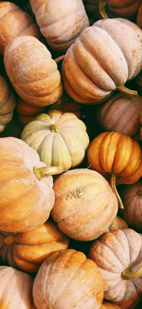 Pumpkin Cute Fall Wallpaper