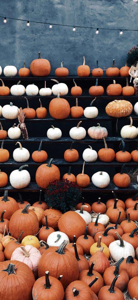 Pumpkin Fall Aesthetic Wallpaper