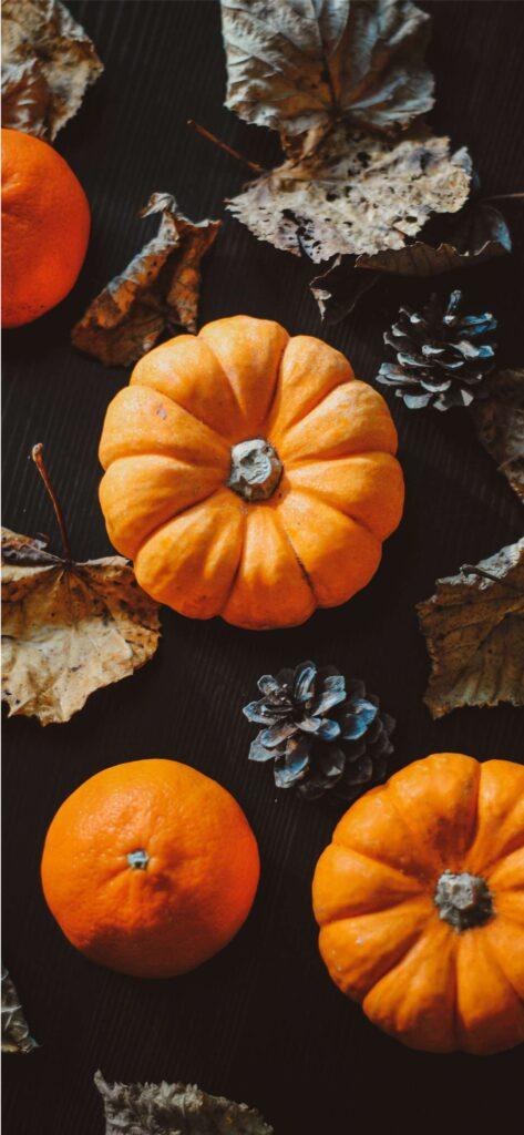 Pumpkin Pinecone Cute Fall Background