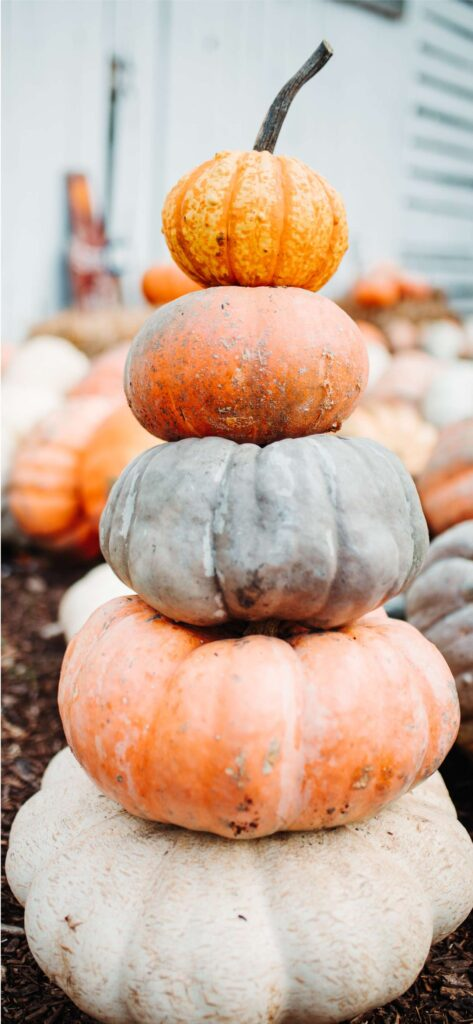 Pumpkins Fall Background iPhone