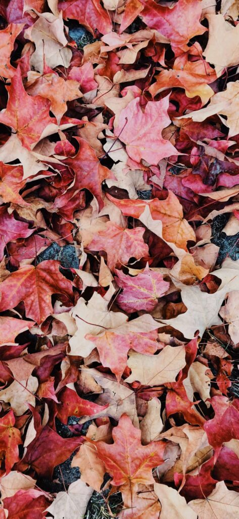 Red Leaves Autumn Wallpaper