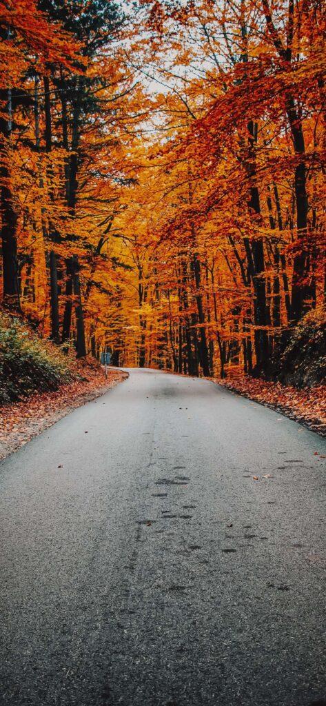 Trees Cute Fall Wallpaper