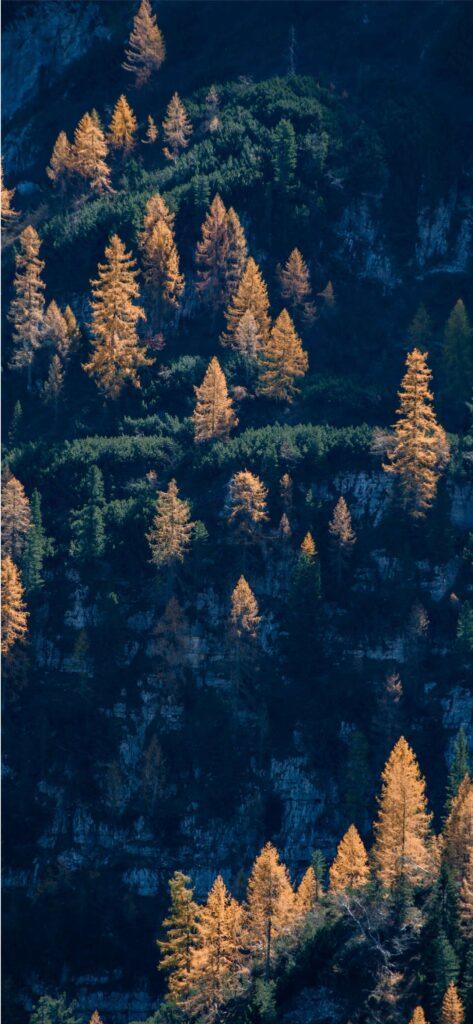 Woodland Autumn Background