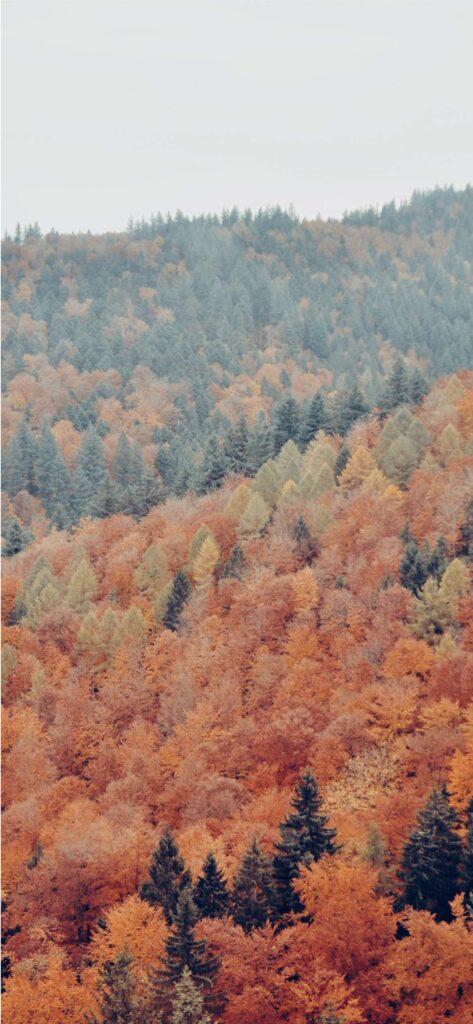 Woodland Autumn Wallpaper