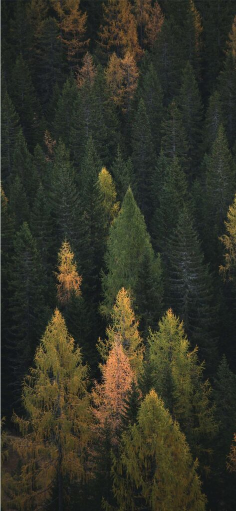 Woodland Fall Background iPhone