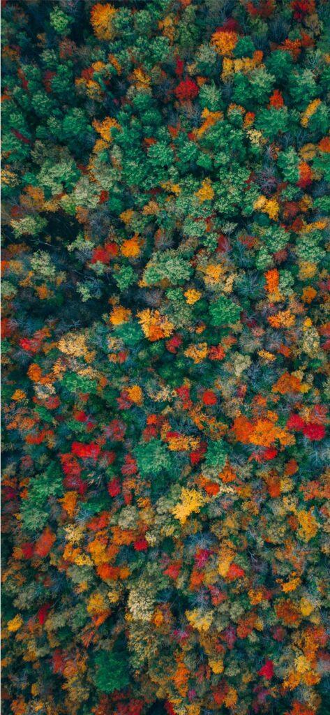 Woodland Fall Wallpaper