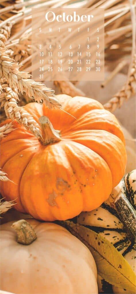 Pumpkins October Calendar Wallpaper